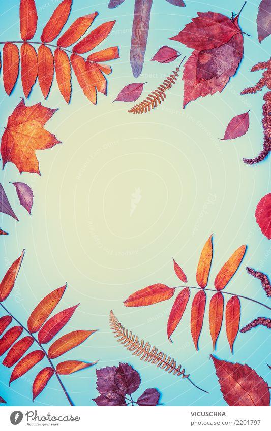 Herbstblätter Rahmen Stil Design Garten Natur Blatt Herbstlaub Hintergrundbild Textfreiraum mehrfarbig rot orange blau Entwurf Farbfoto Innenaufnahme