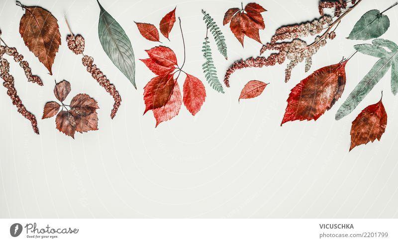 Border mit verschiedenen bunte Herbstblätter Stil Design Erntedankfest Natur Pflanze Blatt Dekoration & Verzierung Ornament Hintergrundbild Herbstlaub