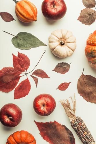 Herbst Composing mit bunte Kürbis Natur Blatt Stil Design Dekoration & Verzierung Gemüse Apfel Stillleben Halloween Erntedankfest Maiskolben
