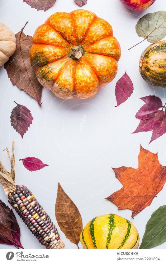 Schöne Herbst Hintergrund mit Kürbis und Laub Lebensmittel Gemüse Lifestyle Stil Design Gesunde Ernährung Garten Erntedankfest Halloween Natur Blatt
