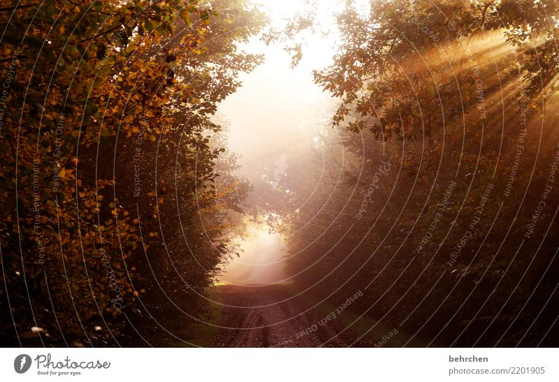erwachen Natur Landschaft Sonnenaufgang Sonnenuntergang Sonnenlicht Herbst Klimawandel Schönes Wetter Nebel Pflanze Baum Sträucher Park Wald schön Hoffnung