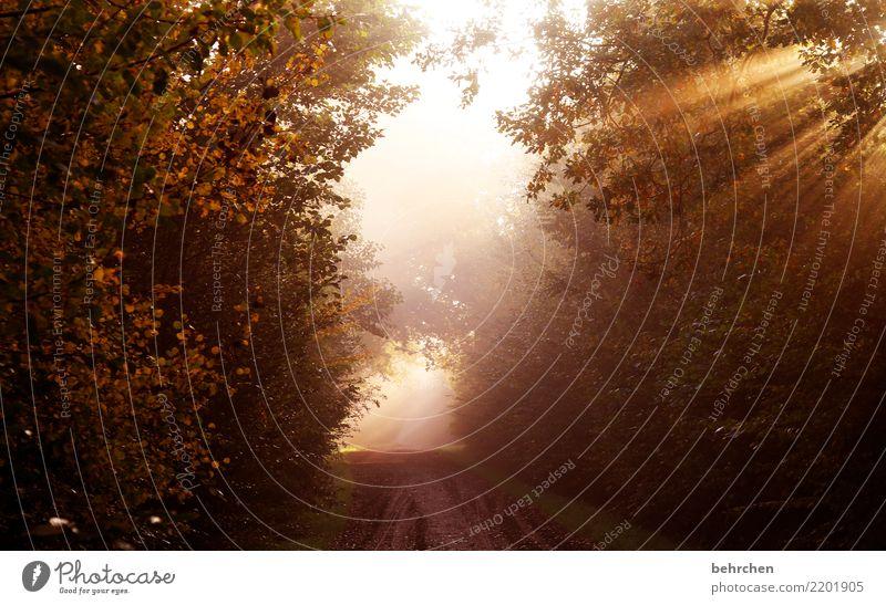 erwachen Natur Pflanze schön Landschaft Baum Blatt Wald Wärme Herbst Wege & Pfade Park Sträucher Schönes Wetter Hoffnung Spaziergang Trauer