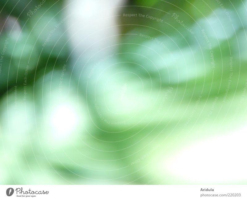 grüne Bewegung Natur Pflanze Sommer Blatt Farbe Gefühle Gras träumen Stimmung Umwelt Zukunft weich rein Duft