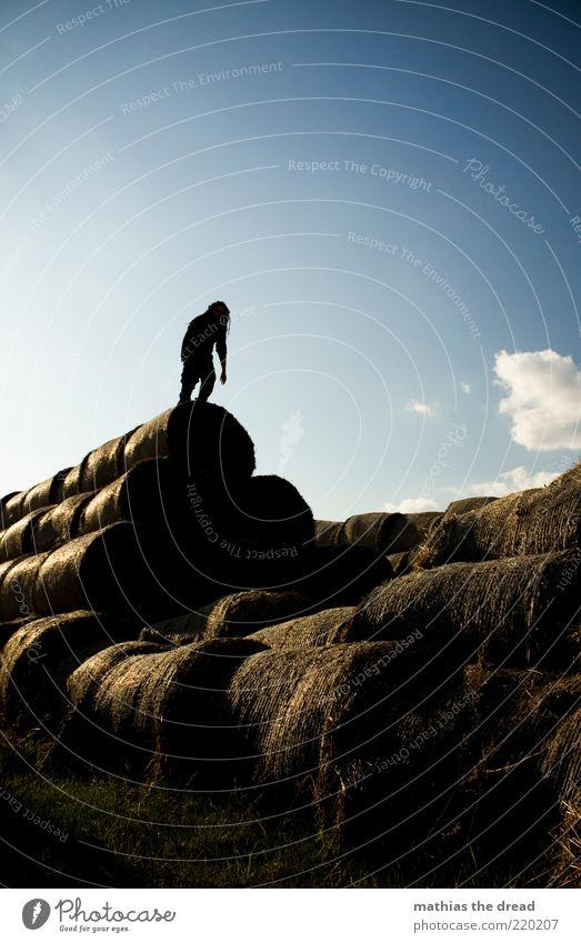 AUFERSTANDEN Freizeit & Hobby Mensch maskulin 1 Umwelt Natur Himmel Wolken Sommer Schönes Wetter Pflanze Gras Feld entdecken Strohballen Stapel Pyramide rund