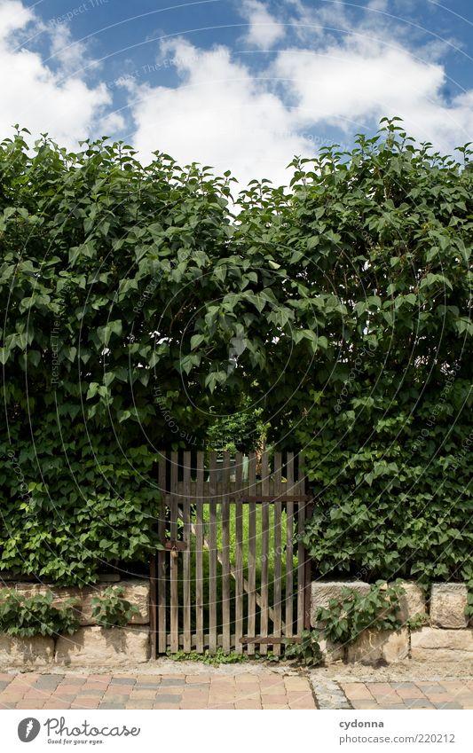 Geheimer Garten Natur Himmel ruhig Garten Wege & Pfade Umwelt geschlossen Sträucher geheimnisvoll entdecken Bürgersteig Eingang Barriere Erwartung Pflastersteine Hecke