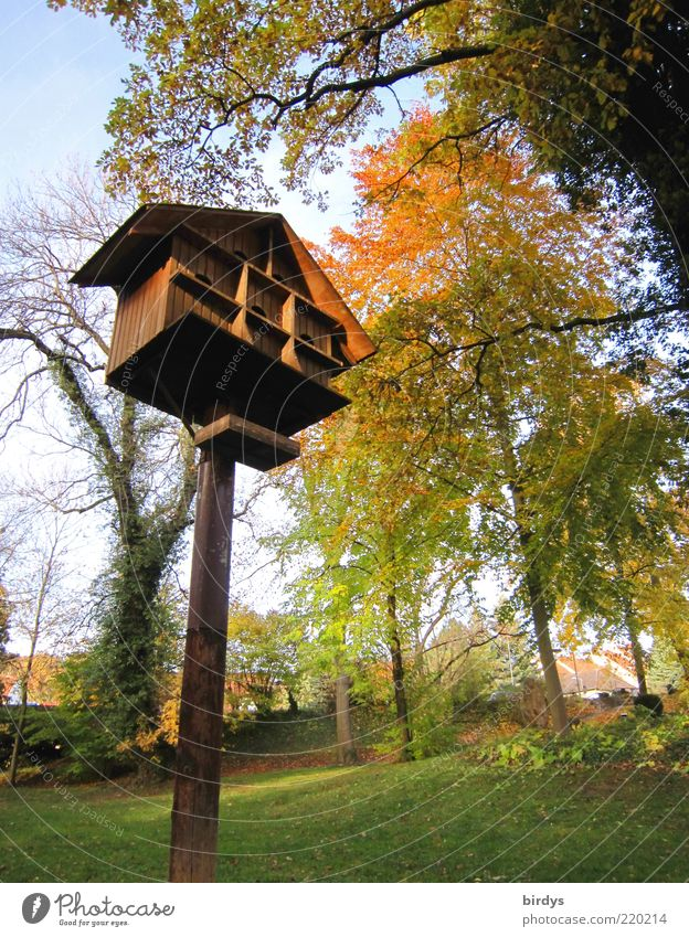 Vogel-Parkhaus schön Baum Erholung Herbst Garten Park Stimmung hoch positiv Schönes Wetter gepflegt herbstlich Herbstfärbung Futterhäuschen Domizil Indian Summer