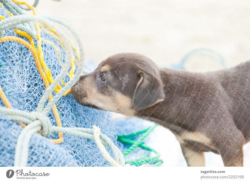 Hund-Welpe, der an einem Fischernetz, Sri Lanka schnüffelt Natur Ferien & Urlaub & Reisen Sommer Sonne Landschaft Erholung Strand Küste Tourismus Sand Idylle