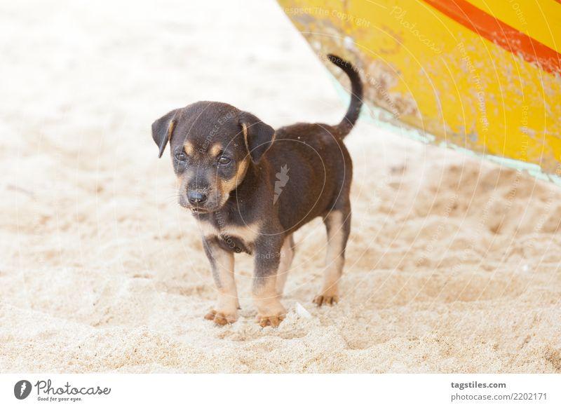 Hund-Welpe, der auf Mama, Sri Lanka wartet Kalpitiya warten Asien Ferien & Urlaub & Reisen reisend Idylle Freiheit Postkarte Tourismus Sonne Sonnenstrahlen