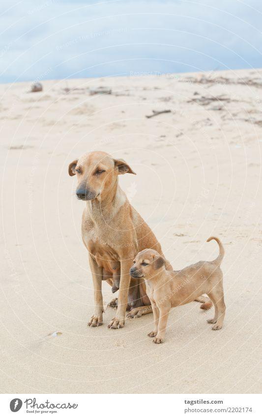Familienporträt; Sri Lanka Natur Ferien & Urlaub & Reisen Hund Wasser Landschaft Meer Erholung ruhig Strand Küste Familie & Verwandtschaft Tourismus Freiheit
