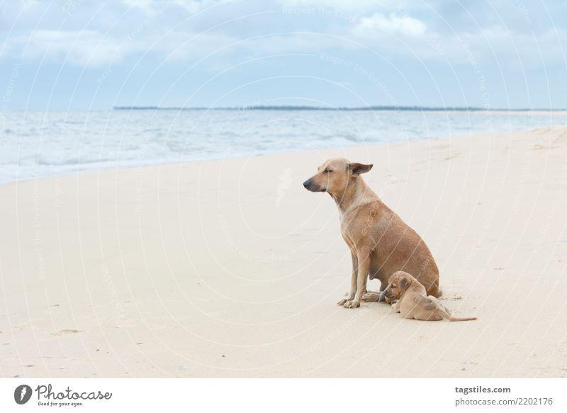 Natur Ferien & Urlaub & Reisen Hund Wasser Landschaft Meer Erholung ruhig Strand Küste Tourismus Freiheit Sand Idylle Wind genießen