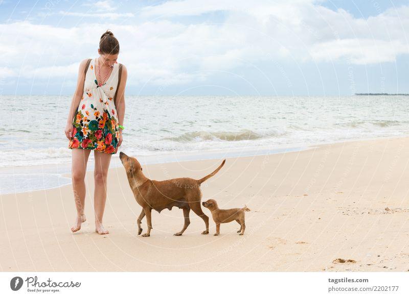 Schnüffeln und lernen, Kalpitiya, Sri Lanka Natur Ferien & Urlaub & Reisen Hund Sommer Wasser Sonne Landschaft Meer Erholung Strand Küste Tourismus Freiheit