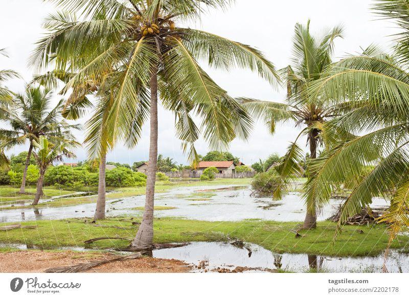 Palmen bei Kakativu, Kalpitiya, Sri Lanka Natur Ferien & Urlaub & Reisen Sommer Sonne Landschaft Erholung ruhig Tourismus Freiheit Idylle Sehenswürdigkeit
