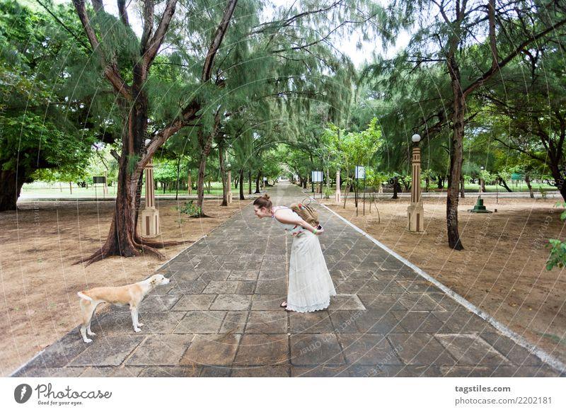 Treffen von Hunden in St. Anne's Kirche, Sri Lanka Frau Natur Ferien & Urlaub & Reisen Sommer Sonne Landschaft Erholung natürlich Tourismus Freiheit Idylle