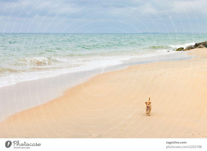 Erkundung der Welt, Kalpitiya, Sri Lanka Thalawila Talawila Abenteurer explodieren erkundend Welpe Hund Asien Idylle Freiheit Postkarte Tourismus Sommer