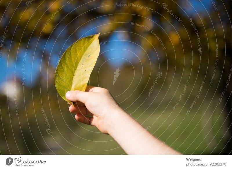 Goldfund Kind Blatt Freude Leben gelb Herbst Junge Ausflug Zufriedenheit wandern Kindheit gold genießen Fröhlichkeit Geschenk Wohlgefühl