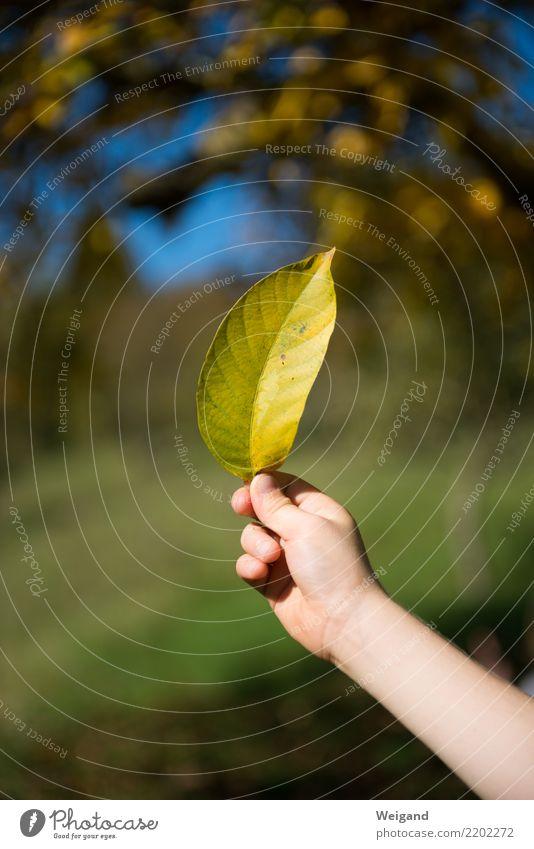 Goldstück II Glück Leben Zufriedenheit Sinnesorgane ruhig Meditation Kindergarten lernen Kleinkind Kindheit Blatt entdecken frei Freundlichkeit Fröhlichkeit