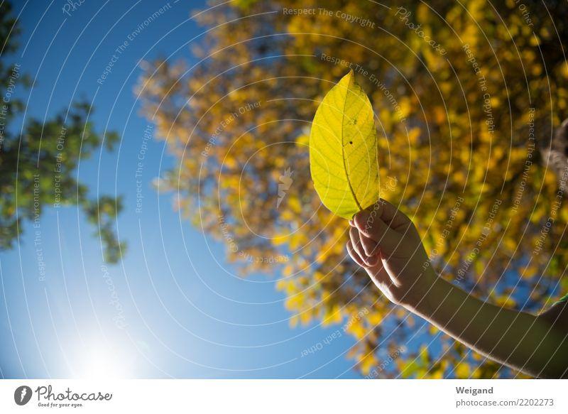 Lichtstrahl Kind Mensch Sonne Hand Blatt Freude gelb Herbst lustig Zufriedenheit wandern Kindheit gold harmonisch Meditation Duft