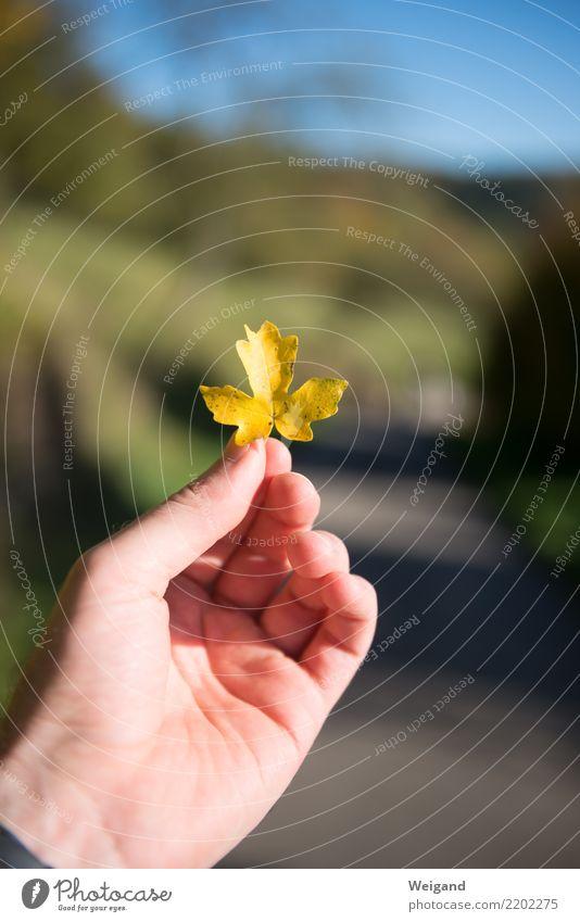 Goldig Hand Erholung ruhig Freude gelb Herbst Glück Zufriedenheit gold Fröhlichkeit Lebensfreude fantastisch Freundlichkeit festhalten Wohlgefühl harmonisch