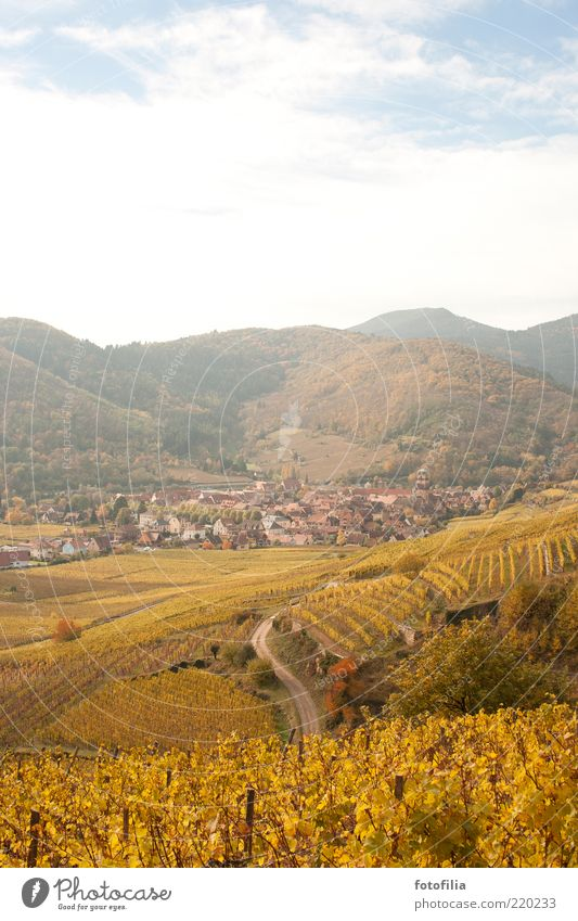 **10** nachträglich für lachfalte Ferien & Urlaub & Reisen Ausflug Ferne Berge u. Gebirge Umwelt Natur Landschaft Himmel Wolken Herbst Wein Weinbau Hügel
