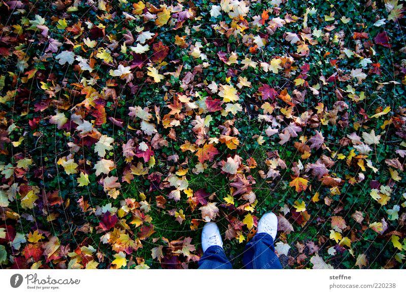 bunt ist gesunt Natur Herbst Blatt Wiese mehrfarbig Herbstlaub Beine Farbfoto Außenaufnahme Fuß herbstlich Herbstfärbung Vogelperspektive Ahornblatt stehen