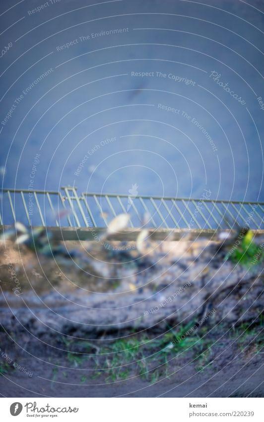 Geländer Natur Wasser Pflanze Umwelt Wege & Pfade Erde nass Zaun Löwenzahn Geländer Pfütze Spiegelbild Grünpflanze Unkraut Wildpflanze Wasserspiegelung