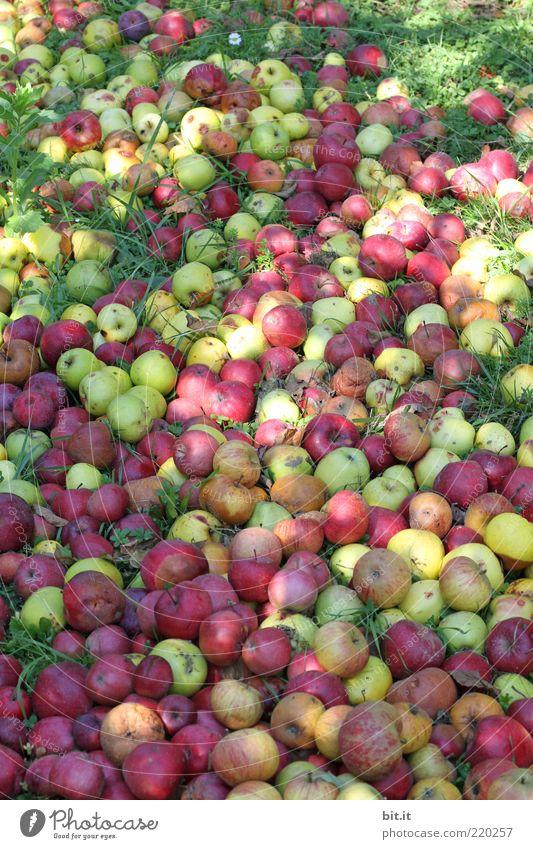 500 Stck. ... Natur alt grün rot Sommer Ernährung Wiese Herbst Garten Feld Gesundheit Lebensmittel Umwelt Frucht frisch verfaulen