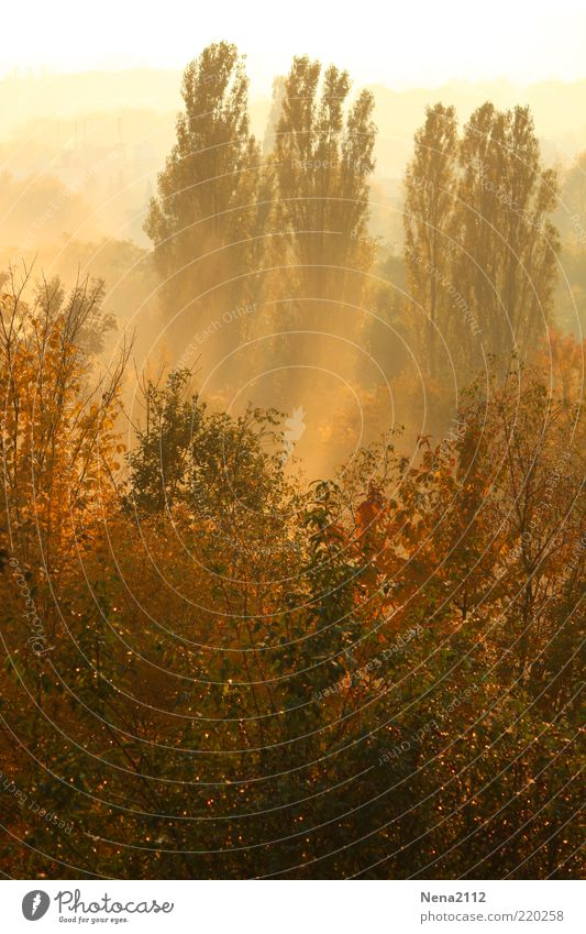 Frühnebel Natur schön Baum Sonne grün Pflanze rot gelb Farbe Wald kalt Herbst Landschaft braun Nebel Wetter