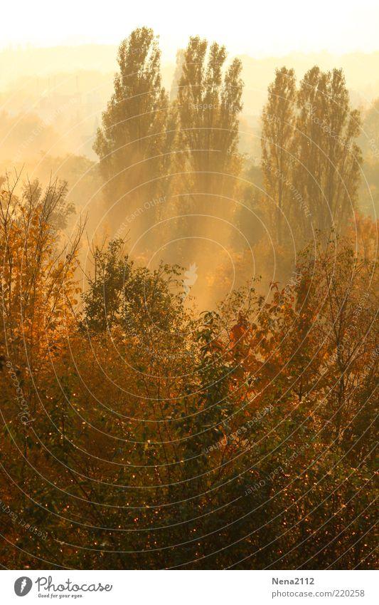 Frühnebel Umwelt Natur Landschaft Pflanze Sonne Sonnenaufgang Sonnenuntergang Sonnenlicht Herbst Klima Wetter Schönes Wetter Nebel Baum Sträucher Wald schön