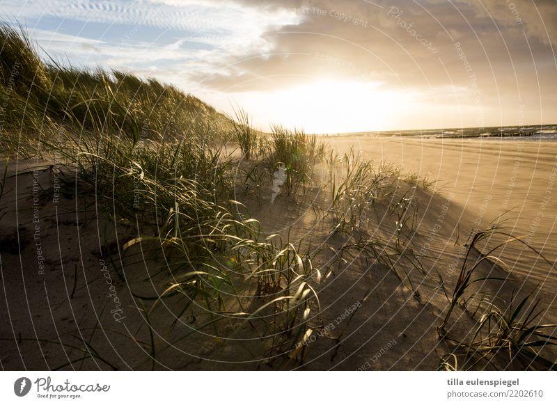 / Strand Meer Umwelt Natur Landschaft Pflanze Tier Himmel Wolken Gewitterwolken Horizont Herbst Wind Regen Küste Ostsee kalt natürlich wild Stimmung