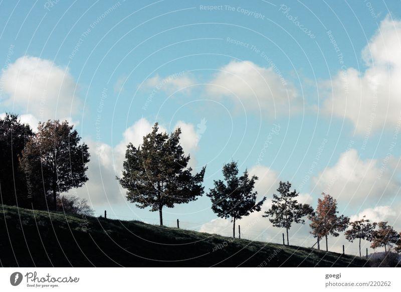 Magritte Umwelt Natur Landschaft Himmel Wolken Sommer Herbst Schönes Wetter Baum Gras Wiese Hügel Straße ästhetisch fantastisch Unendlichkeit blau braun grün