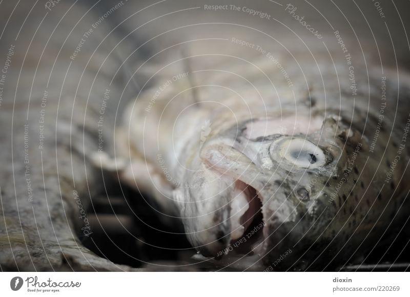 ein Grill voller Fische für bitti Ernährung Tier Kopf Lebensmittel liegen Tierhaut lecker Grillen Ekel Bioprodukte Maul Fischauge Schuppen Fischkopf