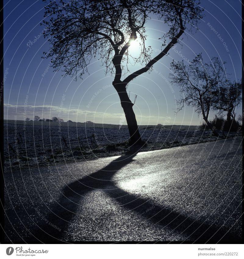 harter Schatten Umwelt Natur Landschaft Winter Klima Wetter Eis Frost Feld Verkehrswege Straße Straßenrand dunkel kalt Stimmung abstrakt deutlich Baum Obstbaum