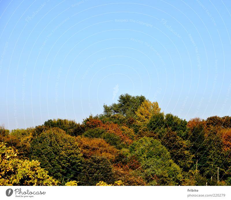 Goldener Herbst Umwelt Natur Landschaft Pflanze Luft Himmel Wetter Schönes Wetter Baum Blatt Wald Gefühle Stimmung Romantik schön authentisch Sehnsucht
