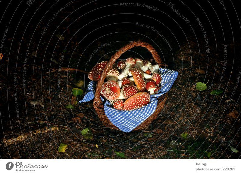 Sommersause Pilzsucher Natur Erde Wald Glücksbringer Fliegenpilz Korb Farbfoto Außenaufnahme Abend Dämmerung Nacht Kunstlicht Blitzlichtaufnahme ansammeln