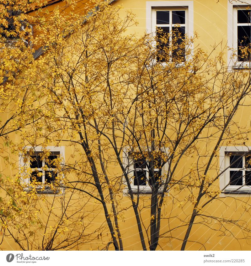Gelb auf gelb weiß Baum Pflanze Blatt schwarz Haus Herbst Wand Fenster Mauer elegant Fassade Wachstum Dach Wandel & Veränderung
