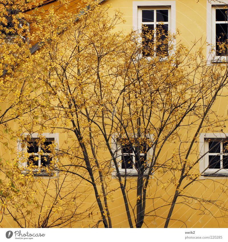 Gelb auf gelb weiß Baum Pflanze Blatt schwarz Haus gelb Herbst Wand Fenster Mauer elegant Fassade Wachstum Dach Wandel & Veränderung