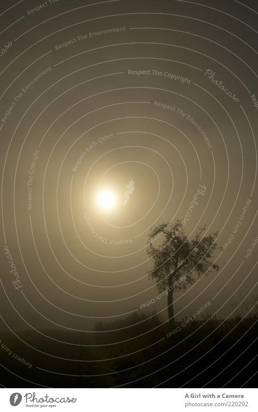 mysterious sky Umwelt Natur Himmel Sonnenfinsternis Herbst schlechtes Wetter Nebel Baum leuchten dunkel gruselig braun grau schwarz Stimmung geheimnisvoll
