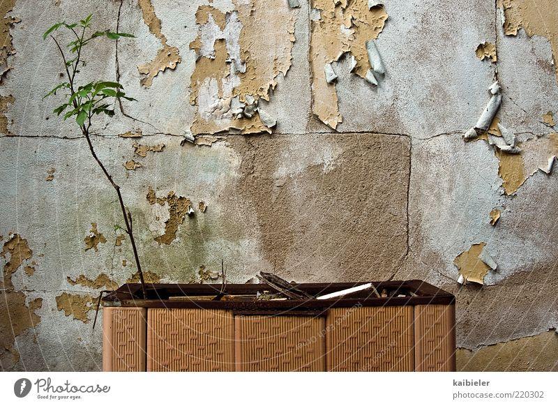 Biomasse-Heizung alt Pflanze gelb Wand grau Mauer Energiewirtschaft Wachstum kaputt Sträucher Wandel & Veränderung Vergänglichkeit verfallen Vergangenheit Verfall Putz