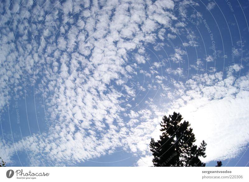 skyscraper Umwelt Natur Pflanze Luft Himmel Wolken Klima Wetter Schönes Wetter Baum Erholung genießen fantastisch frei hell natürlich blau schwarz weiß Stimmung