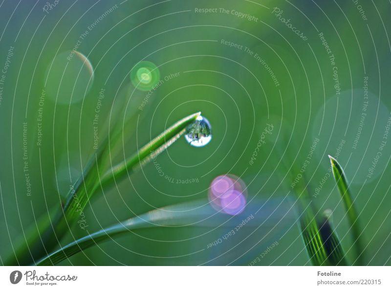verwunschen Natur Wasser grün Pflanze Gras hell Umwelt nass Wassertropfen natürlich Tau Halm Urelemente Blendenfleck Makroaufnahme mehrfarbig