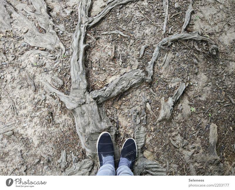 Holzweg Ausflug Fuß Umwelt Natur Pflanze Baum Wurzel Schuhe alt abstrakt Waldboden Farbfoto Außenaufnahme