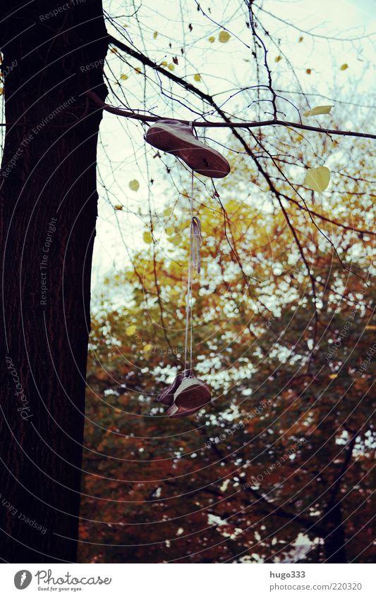 Berlin VII Schuhbänder Turnschuh Herbst Baum Ast Zweig Baumstamm Bekleidung Schuhe hängen skurril Traurigkeit mehrfarbig Herbstfärbung Farbfoto Außenaufnahme