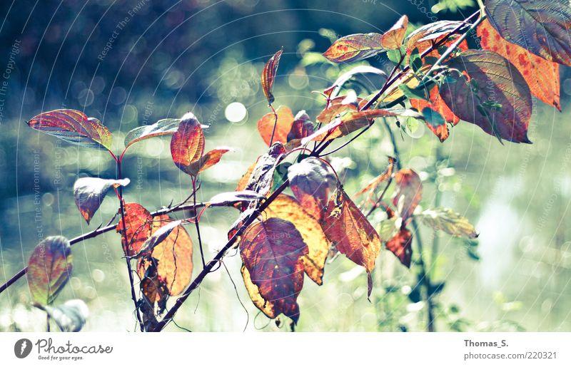 Herbst Impression Natur Pflanze Sträucher Blatt Teich Gefühle Herbstfärbung Herbstlaub herbstlich mehrfarbig Außenaufnahme Nahaufnahme Tag Kontrast Unschärfe