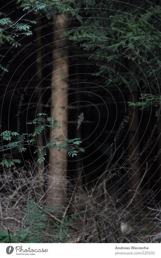 Dark Wood Umwelt Natur Pflanze Herbst Baum Farn Grünpflanze Wildpflanze Tanne Unterholz Wald Ast Holz alt dunkel natürlich grün schwarz ruhig Farbfoto