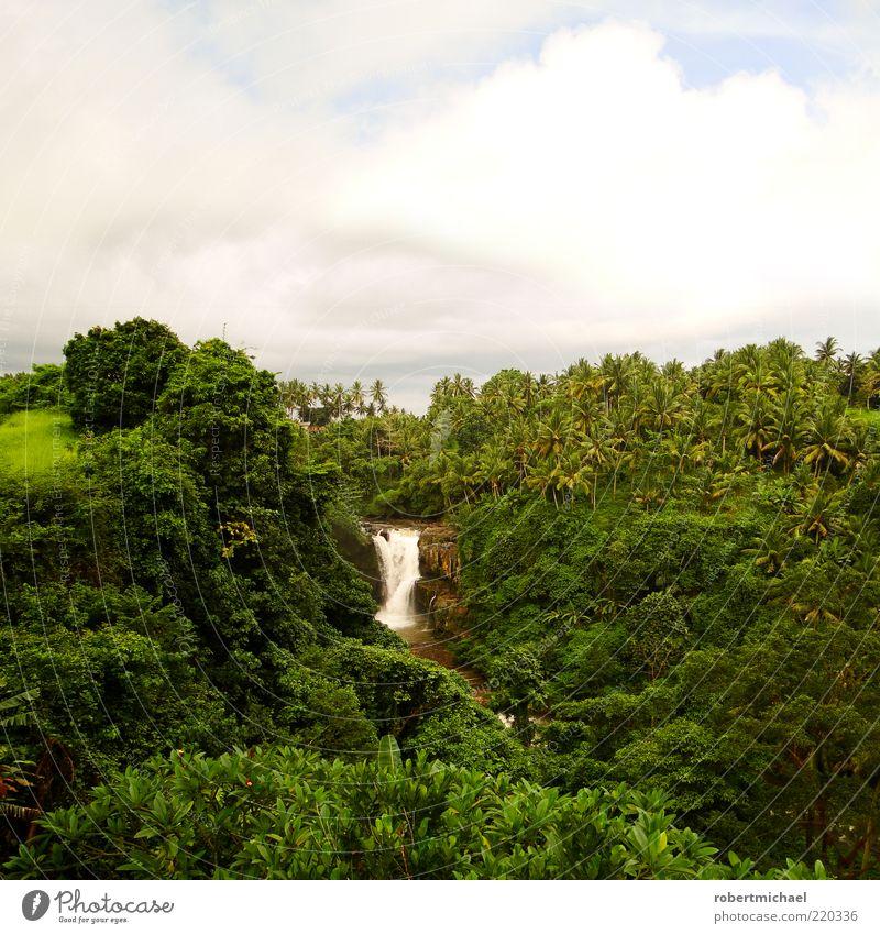 Wasserfall im Dschungel Natur Sonne grün Pflanze Sommer Wolken Ferne Wald Berge u. Gebirge Freiheit Landschaft Umwelt Fluss Urwald Palme