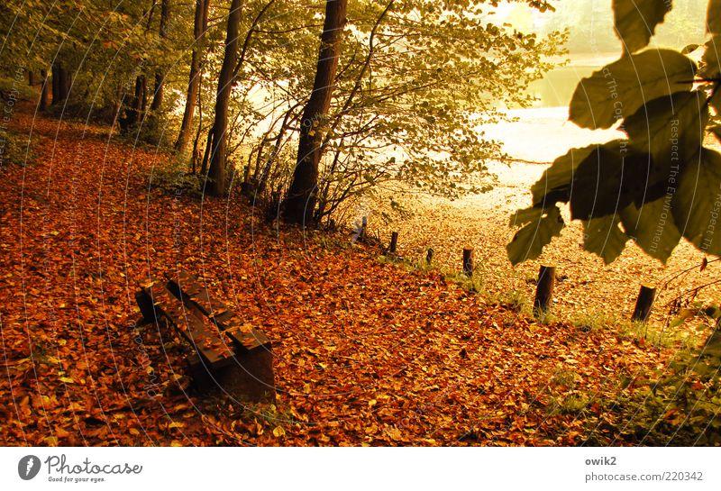 Volksbank Umwelt Natur Pflanze Herbst Baum Blatt Zweige u. Äste Herbstlaub Park Wald Teich See Sitzgelegenheit Bank Parkbank Holz dehydrieren gelb grün rot weiß