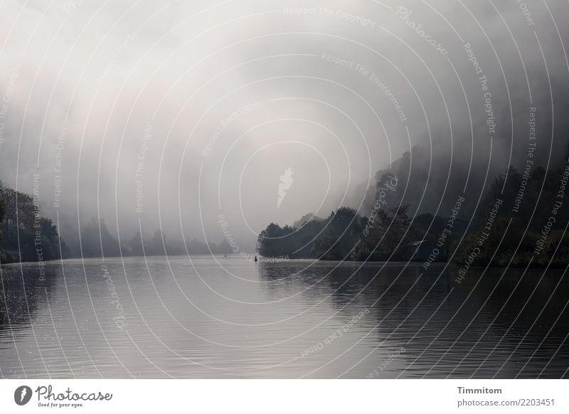 Nebelmorgen. Umwelt Natur Landschaft Pflanze Urelemente Wasser Herbst Baum Fluss Neckar Gebäude ästhetisch natürlich grau schwarz Gefühle Reflexion & Spiegelung