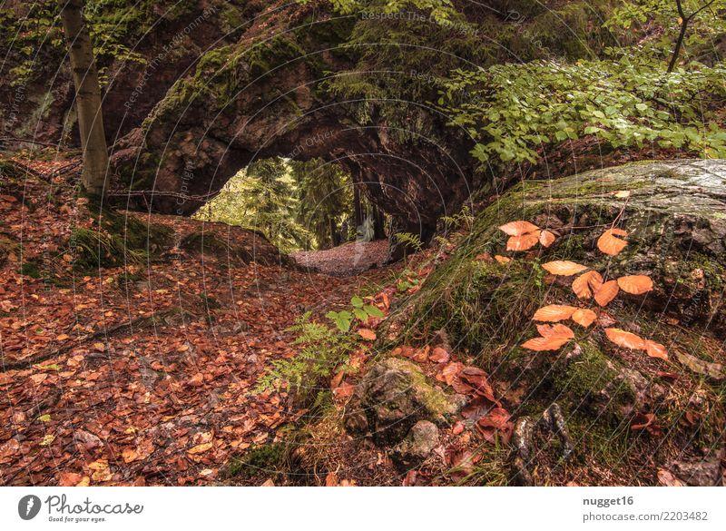 der Torstein bei Tabarz / Thüringer Wald Freizeit & Hobby Ferien & Urlaub & Reisen Tourismus Ausflug Sommer Berge u. Gebirge wandern Umwelt Natur Landschaft