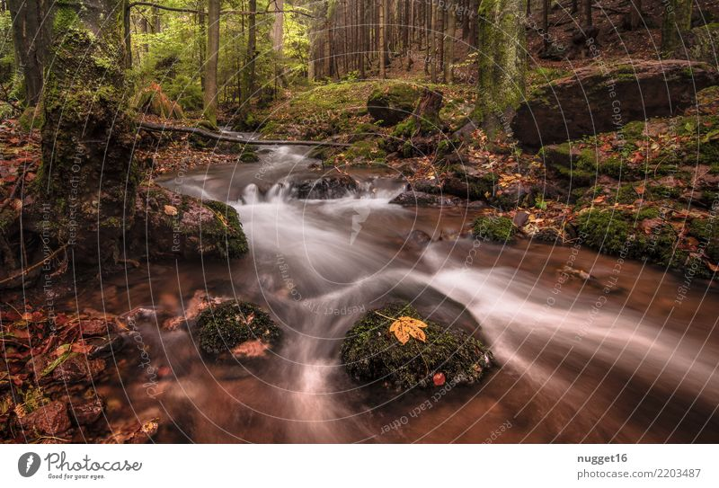 im Lauchagrund / Thüringen Natur Ferien & Urlaub & Reisen Pflanze Sommer grün Wasser weiß Baum Landschaft Ferne Wald Berge u. Gebirge gelb Umwelt Herbst