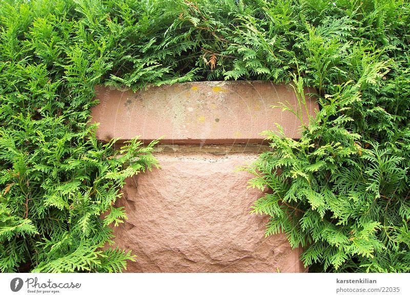 Pflanzenmauer Mauer Sandstein durcheinander grün zuwuchern Pfosten Stein eingewachsen